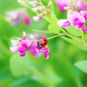 「萩(ハギ)」が見頃になる季節は?花言葉や萩に関する豆知識もご紹介