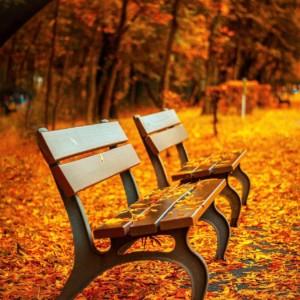 【秋の行楽シーズン】ウィズコロナでどう変わる?新しい楽しみ方【旅・グルメ】