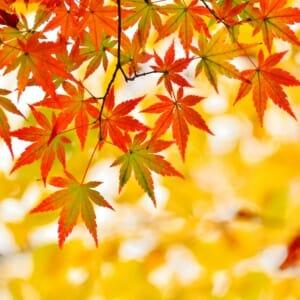 紅葉(もみじ)ネイルで秋を先取り!セルフで出来るデザイン【10選】