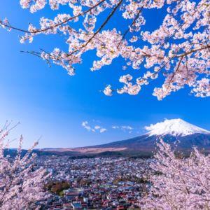 桜は何月に咲いていつから散る?都道府県別に桜の時期を調べてみた!