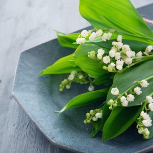 すずらんの情報まとめ!季節や開花時期・花言葉・香りなど魅力をご紹介