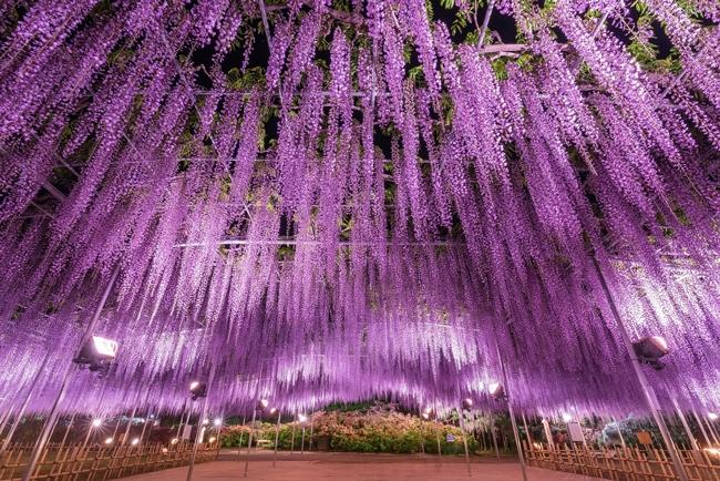 あしかがフラワーパーク/栃木県