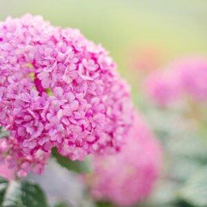 紫陽花ネイルをセルフで簡単に♪プロおすすめデザイン【5選】