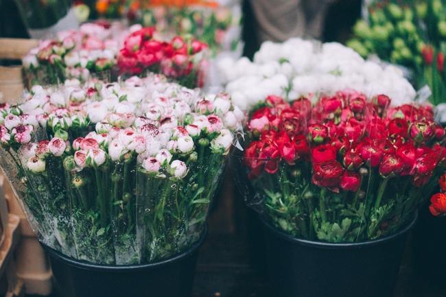 売られているバラ